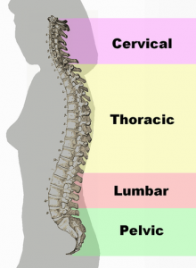 spine-health-curvature-chiropractic-wellness