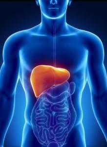 liver-digestion-health