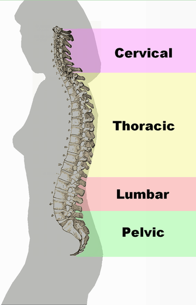 spinal-column-curvature-health