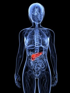 importance-pancreas-health