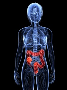 colon-pancreas-health-ottawa-wellness