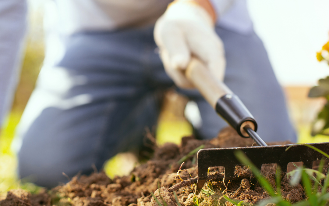 The Health Benefits of Gardening and Tips to Doing it Pain-Free